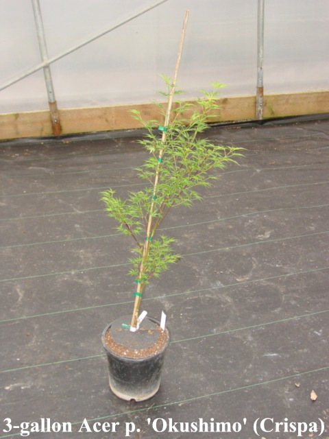 A Leaf Less Ordinary Smaller Potted Trees